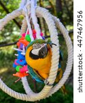 Beautiful Macaw Parrot In An...