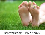Woman Legs With Daisy On Green...