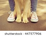 Stock photo boy and his dog on street 447577906
