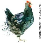 Chicken Illustration Watercolor