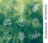berries line icons set ... | Shutterstock .eps vector #447653452