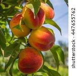 Close Up Of The Ripe Fruit Peach