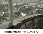 Two White Pigeons  With City O...
