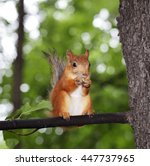 Red Squirrel On A Tree Eats A...