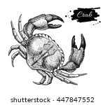 vintage crab drawing. hand... | Shutterstock . vector #447847552