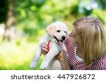 Stock photo young beautiful woman with a white puppy labrador retrievers dogs and woman outdoor portrait 447926872
