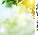Small photo of Afternoon cast, abstract summer backgrounds with green leaves and sun beam