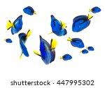 Blue Tang Fish  Marine Life...