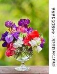 mix color sweet pea  lathyrus...   Shutterstock . vector #448051696