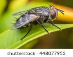 insect fly on on green leaf | Shutterstock . vector #448077952