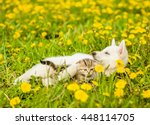 Stock photo puppy playing with a kitten on the lawn of dandelions 448114705