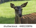 Deer In The Mountain