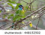 beautiful  blue eared barbet  | Shutterstock . vector #448152502