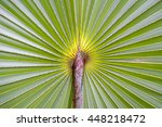 palm leaf background close up... | Shutterstock . vector #448218472