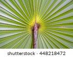 palm leaf background close up... | Shutterstock . vector #448218472
