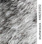 Gray Rabbit Fur As Background