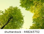 Deciduous Tree Seen From The...