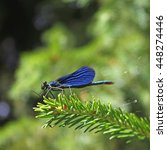 blue dragonfly sitting on a... | Shutterstock . vector #448274446