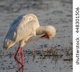 Small photo of African spoonbill standing in water, South Africa