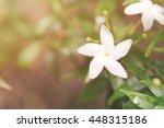 White Flower With Morning Ligh...