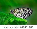 Beautiful Butterfly Paper Kite  ...
