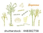 hand drawn sugar cane set.... | Shutterstock .eps vector #448382758