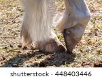 detailed view of horse hooves... | Shutterstock . vector #448403446