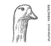 Head Goose. Hand Drawn In A...