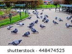 A Flock Of Pigeons In The Park