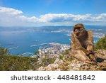a wild macaque or gibraltar...   Shutterstock . vector #448481842
