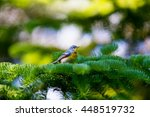 a small warbler of the upper... | Shutterstock . vector #448519732
