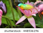 Bird Living On Flowers