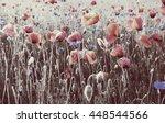 wildflowers poppies | Shutterstock . vector #448544566
