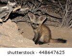 bat eared fox pup at the den | Shutterstock . vector #448647625