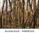 gorgeous stretch of forest ... | Shutterstock . vector #44868163