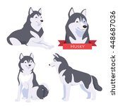 husky in different poses. dog... | Shutterstock .eps vector #448687036