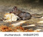Two Mice Feeding On Scone In...