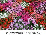 Horizontal Bed Of Flowers