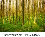 forest without leaves in early... | Shutterstock . vector #448713592