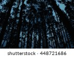 Mysterious Forest With Gloomy...