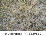 texture of dense network of ... | Shutterstock . vector #448839682