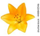 beautiful lily flower yellow... | Shutterstock . vector #448843546