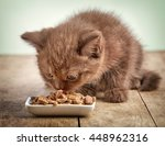 Kitten Eating Cats Food