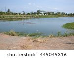 Fish Pond In Country Thailand