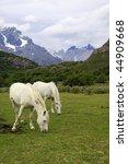 two white horses feeding in... | Shutterstock . vector #44909668