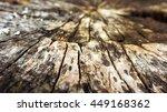 old big stub in the wood dark...   Shutterstock . vector #449168362