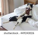 Tuxedo Cat Is Sitting On The...