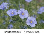 blue flax flowers in garden | Shutterstock . vector #449308426