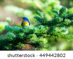 The Northern Parula Is A...