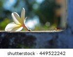 small ant walk near flower ... | Shutterstock . vector #449522242